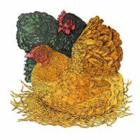 pumpkin and betty hens